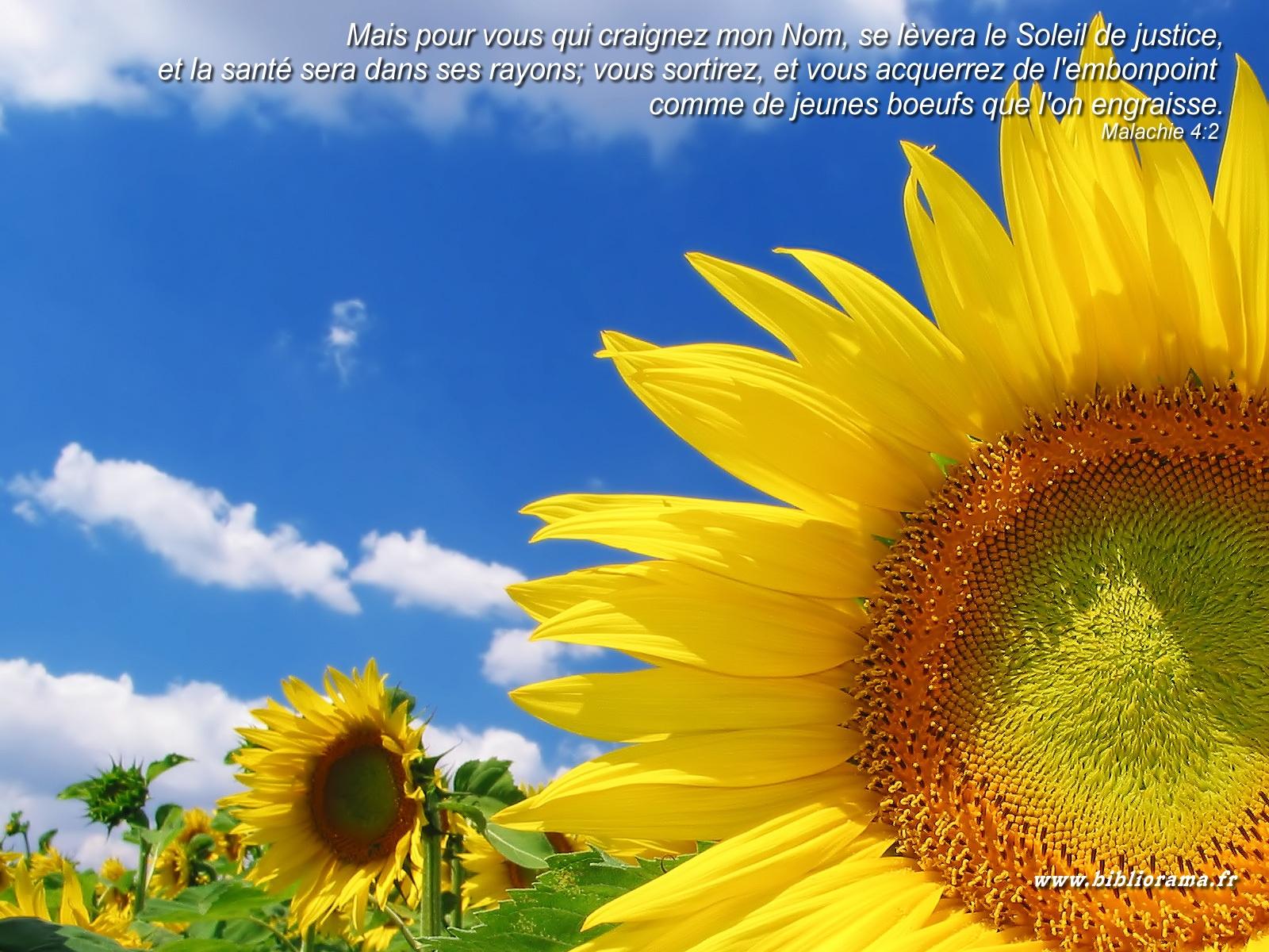 Super Images avec verset biblique - Page 21 ZP11
