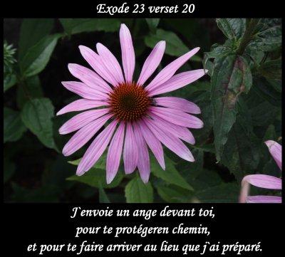 Connu Images avec verset biblique - Page 13 WD78