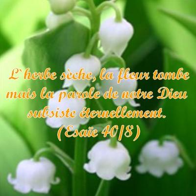 Connu Images avec verset biblique - Page 19 WD78
